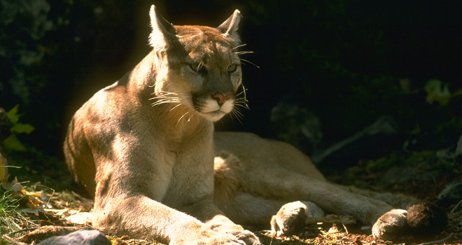 mac os x mountain lion Mac OS X Mountain Lion Developers Preview is now Available for Download